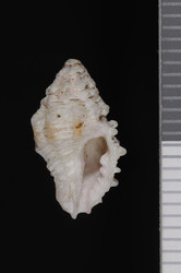 To ANSP Malacology Collection
